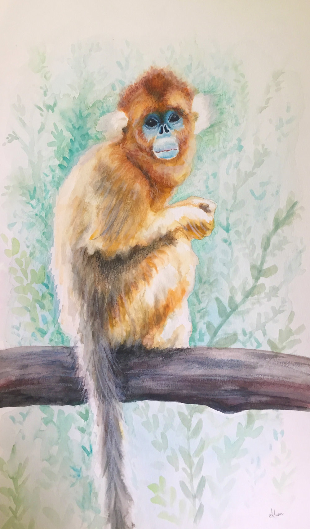 MONKEY (Golden Snub-nosed Monkey)