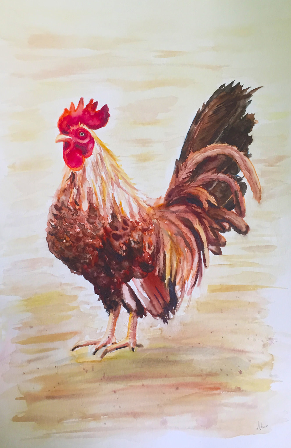 ROOSTER (Serama Rooster)