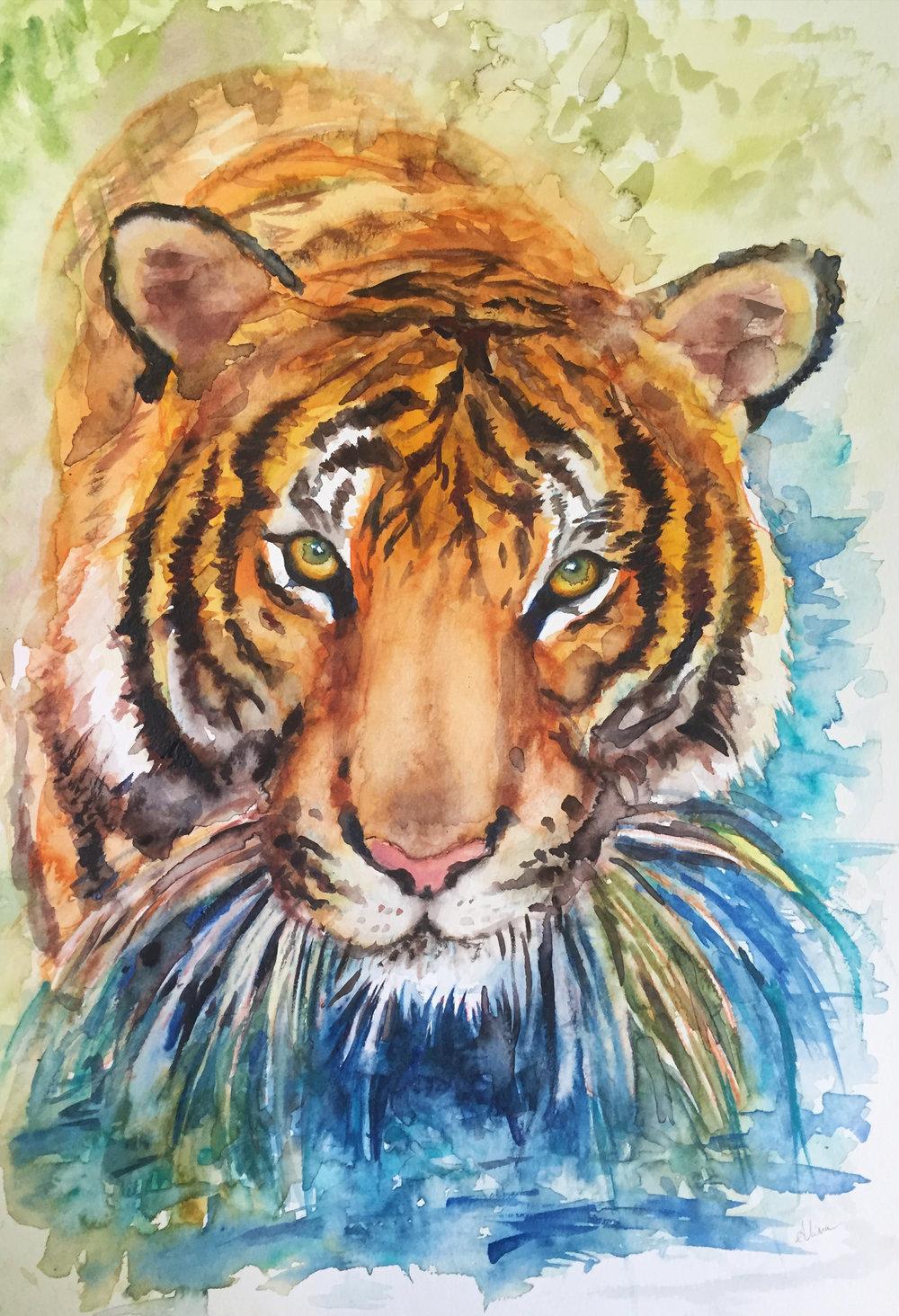 TIGER (Malayan Tiger)