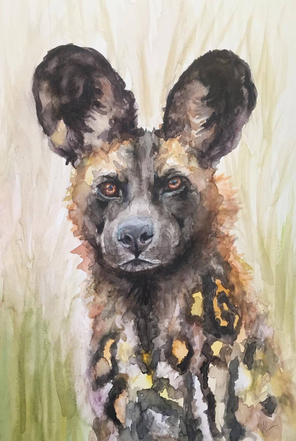 DOG (African Wild Dog)