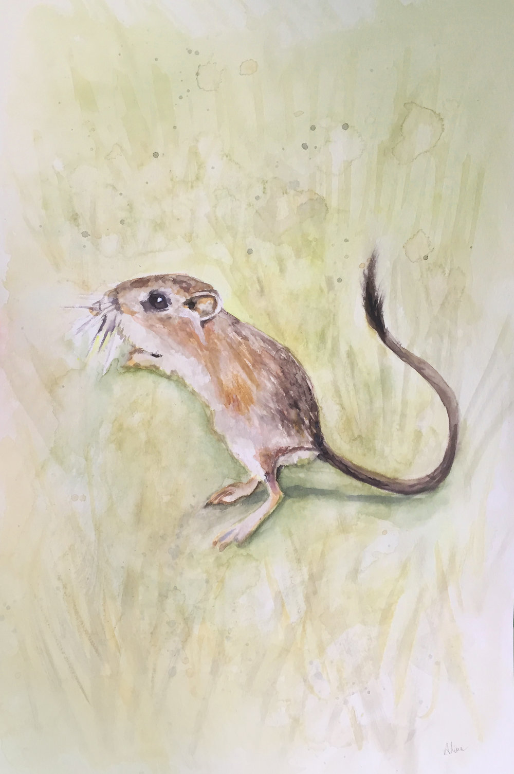 RAT (Giant Kangaroo Rat)