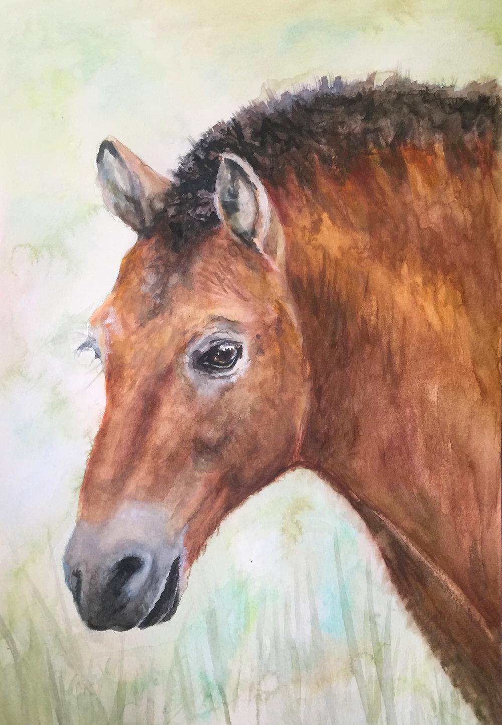 HORSE (Przewalski's Horse)