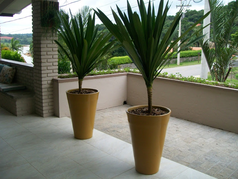 ÁREA DA PISCINA - DECK DE MADEIRA  OPÇÃO 2  Espécie: Dracena arborea em vaso diferenciado de destaque
