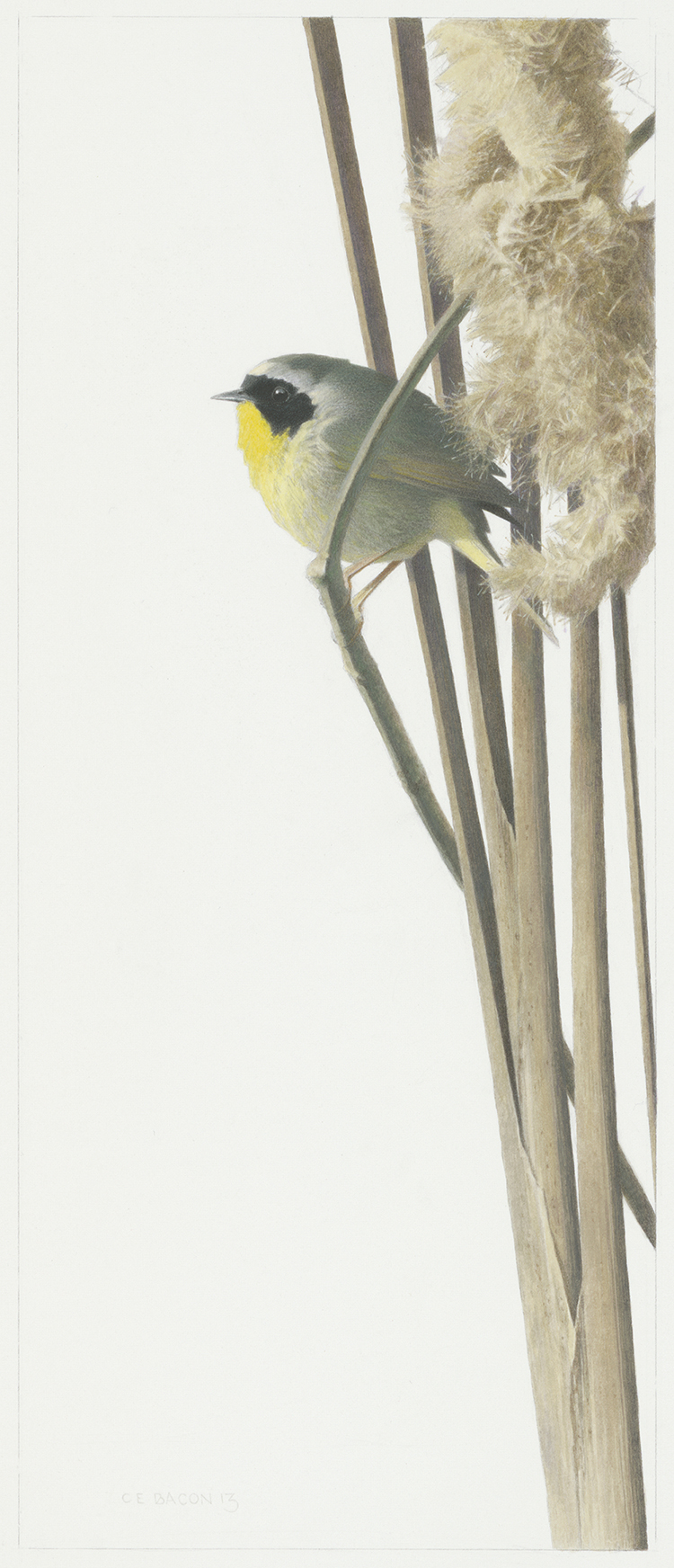 Study for Yellowthroat