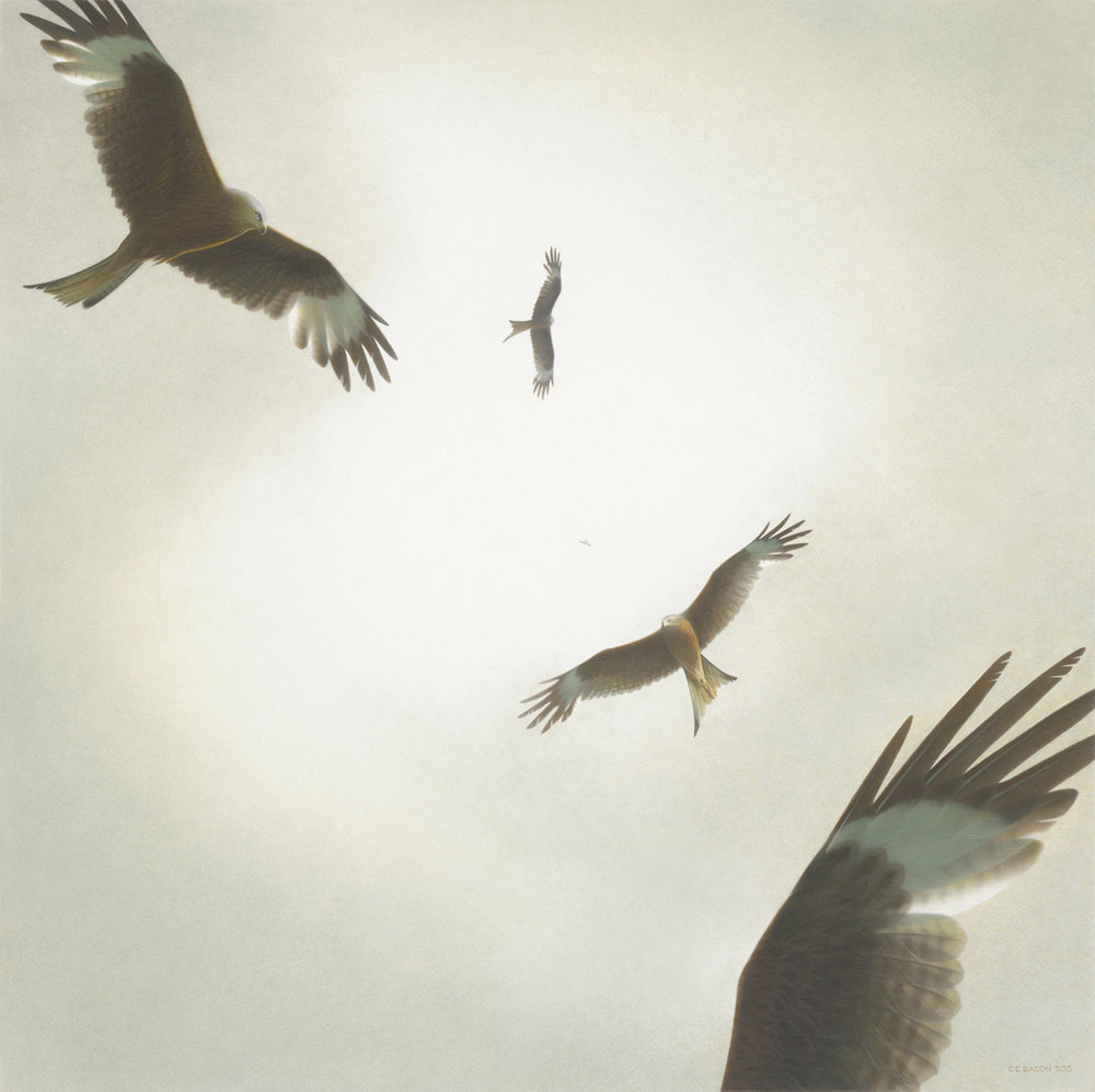 Ascension (Red Kite)