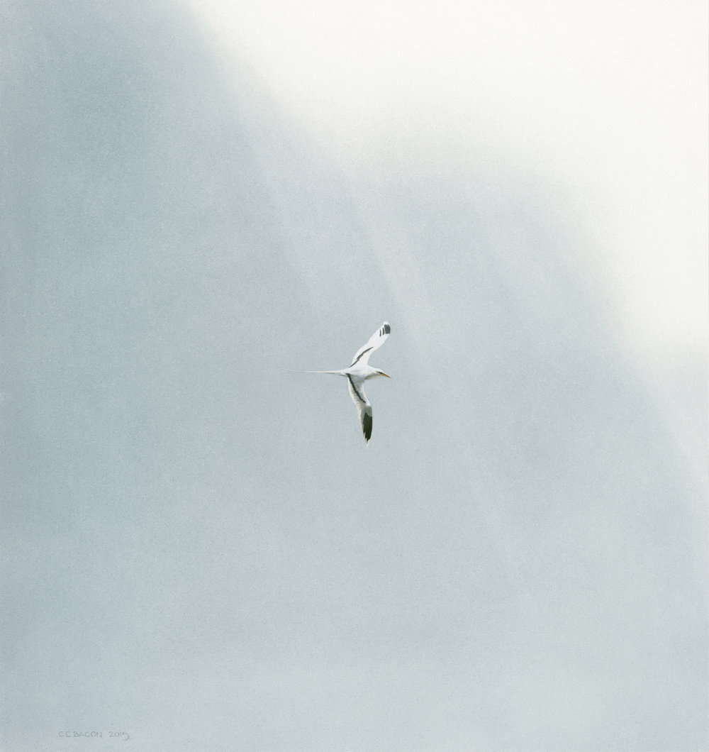 Thin Air (Tropicbird)
