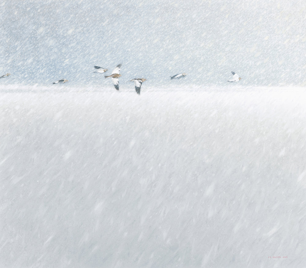 Out of Silence (Snow Buntings)