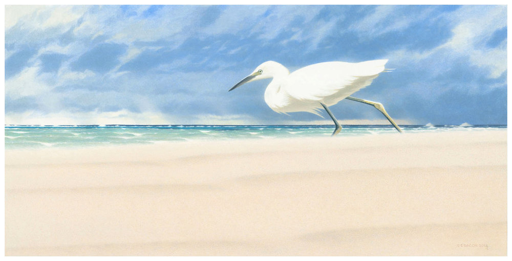 "'Rain or Shine'  (Snowy Egret) acrylic on rag board •29 cm x 57 cm •11.25"" x 22.50"""