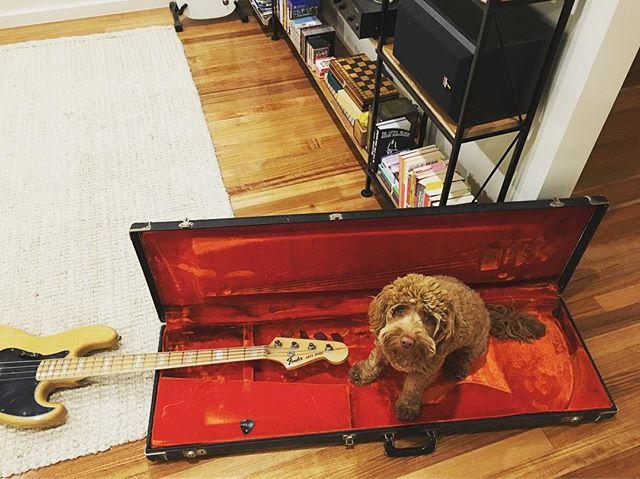 Getting ready for @littlemammoths Australian show at @retreat_hotel_brunswick on Sunday. 🐕 🐶