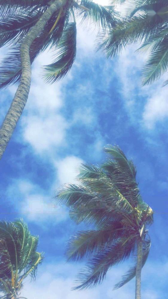 Palm Trees .jpg