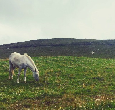 """How wild it was, to let it be."" - Cheryl Strayed : saw this beauty on a hike in Ireland the day before I stopped running. One of these days, I'll tell you all about our magical encounter..."