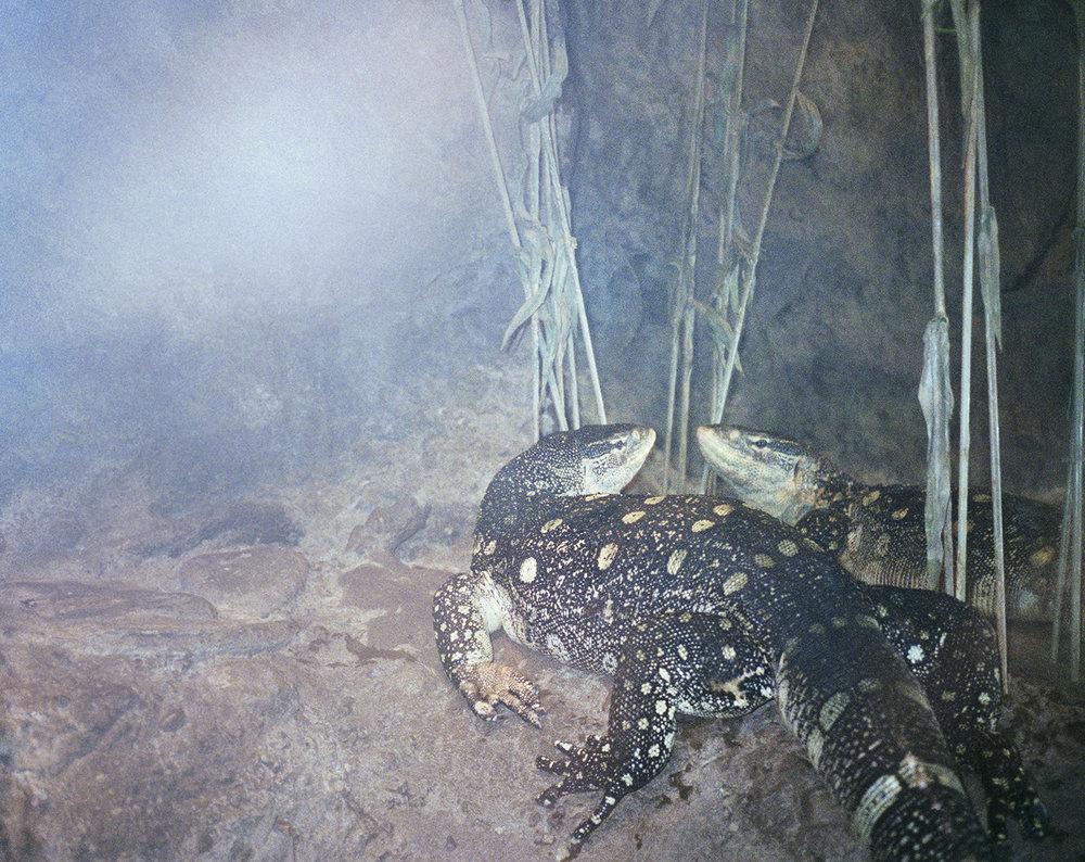 lizard 002editied copy.jpg