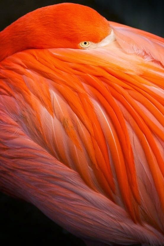 flamingo_coloiur.jpg