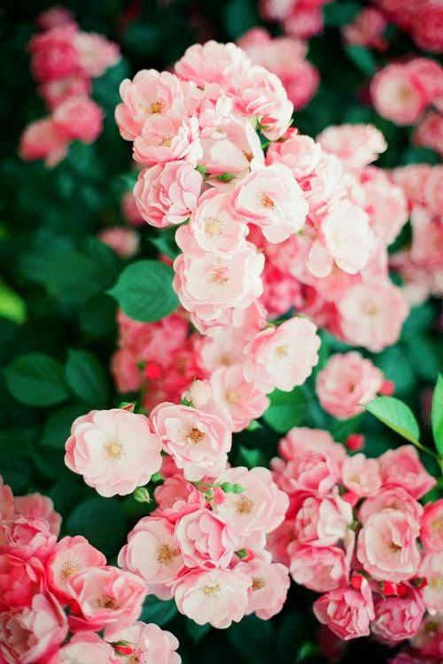 rose:emerald_colour.jpg