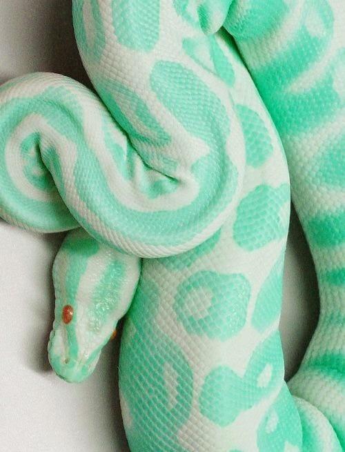 snake_colour.jpg