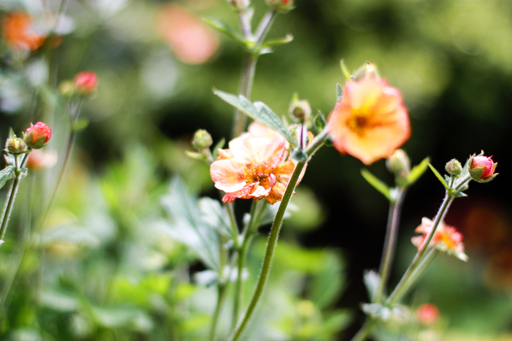 Kilcoan Gardens-1.jpg