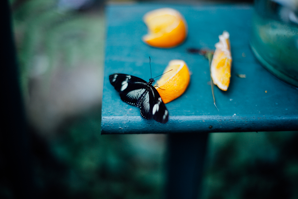 Butterfly Farm Completed-14.jpg