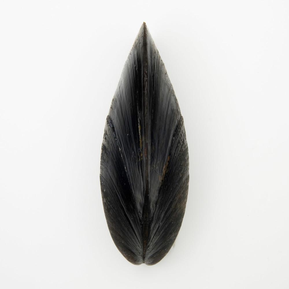 mussleprint.jpg