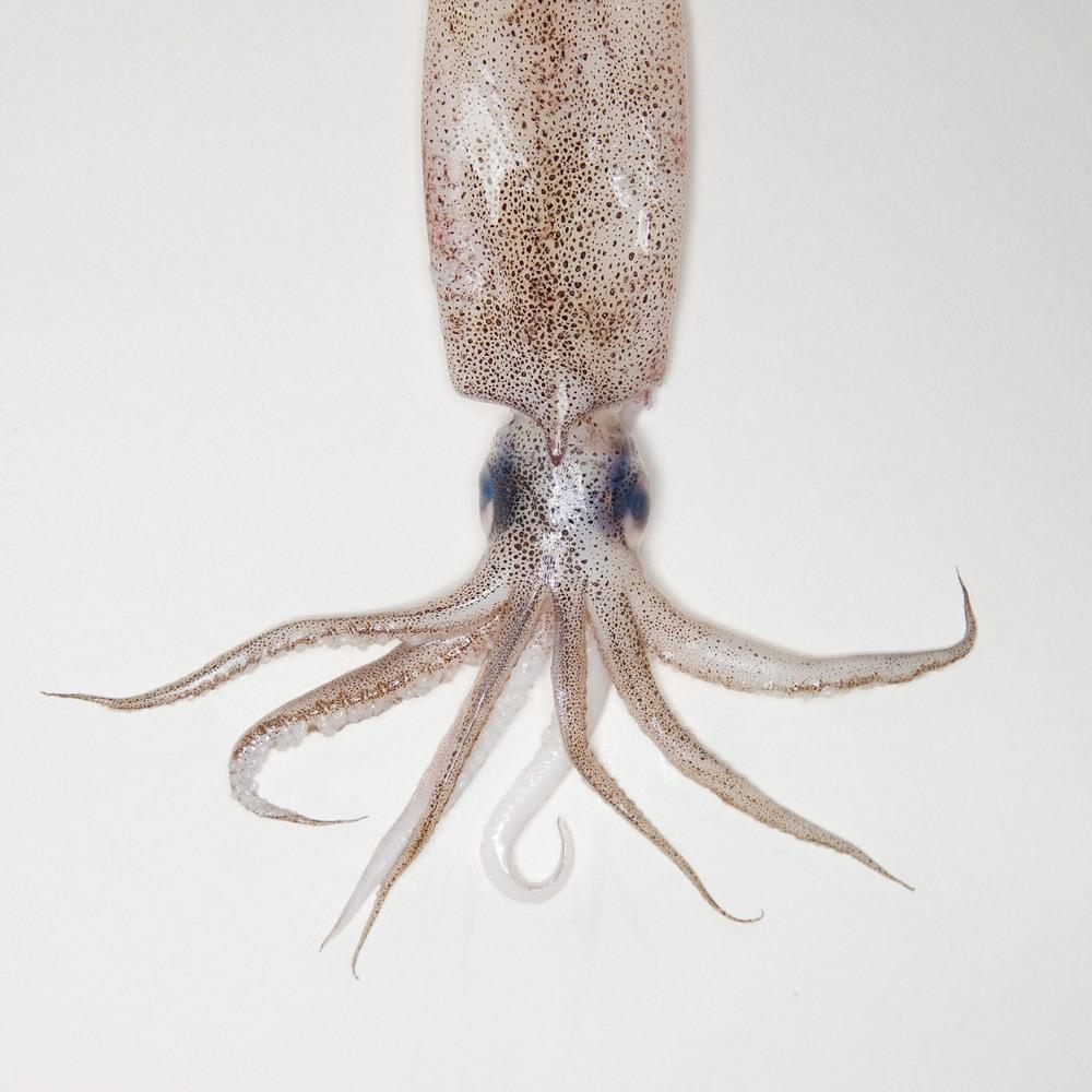 squidprint.jpg