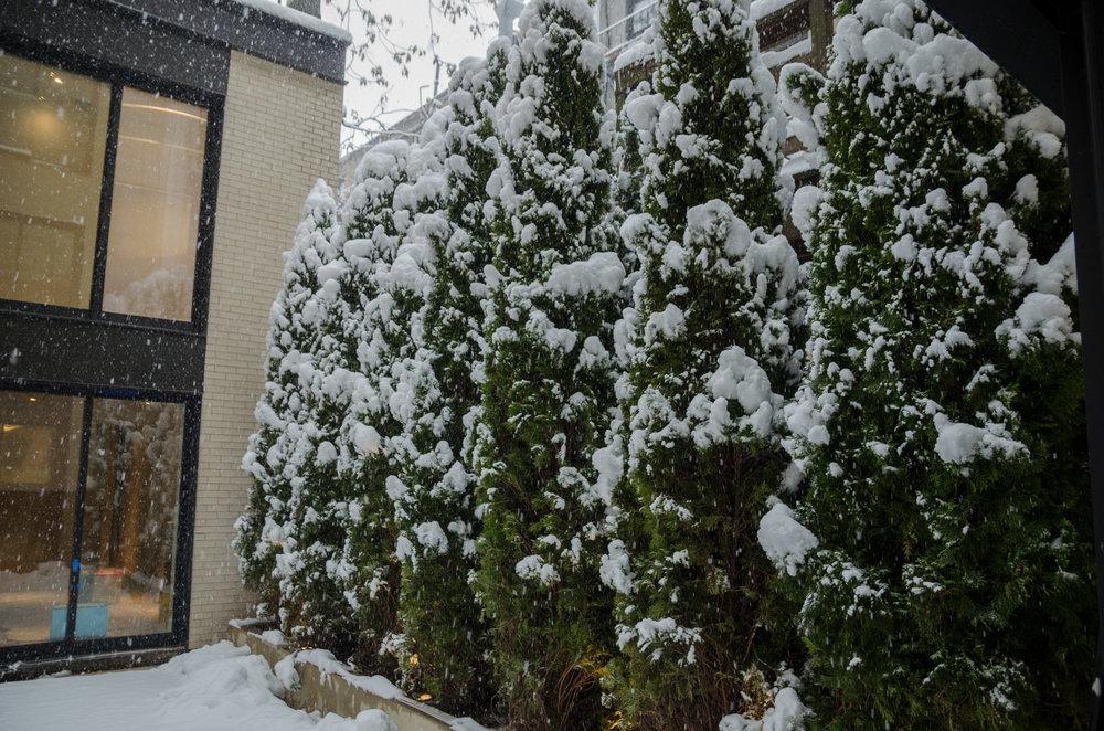 2017-02-09 - Snow Storm-16.jpg