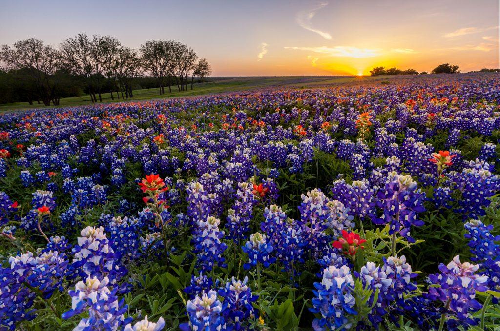 Bluebonnet Ride Waller Texas Sisters Eternal Wmc