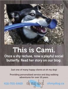 Toronto Dog Walker Poster