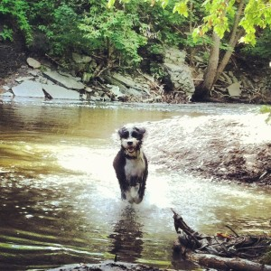 Ellie, the Porti from Quees West, at one of our favourite and secret spots, a ravine in Toronto. She's pretty impressed!