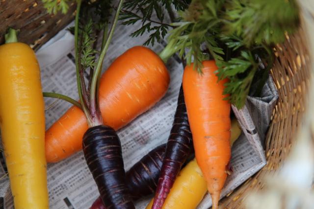 IZUHO-organic-farm-japan.jpgIZUHO-organic-farm-japan.jpg