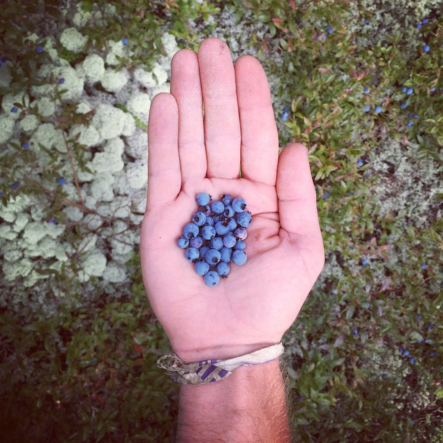 You just can't beat mountain top blueberries. #at2015 #nobo #ME #blueberries