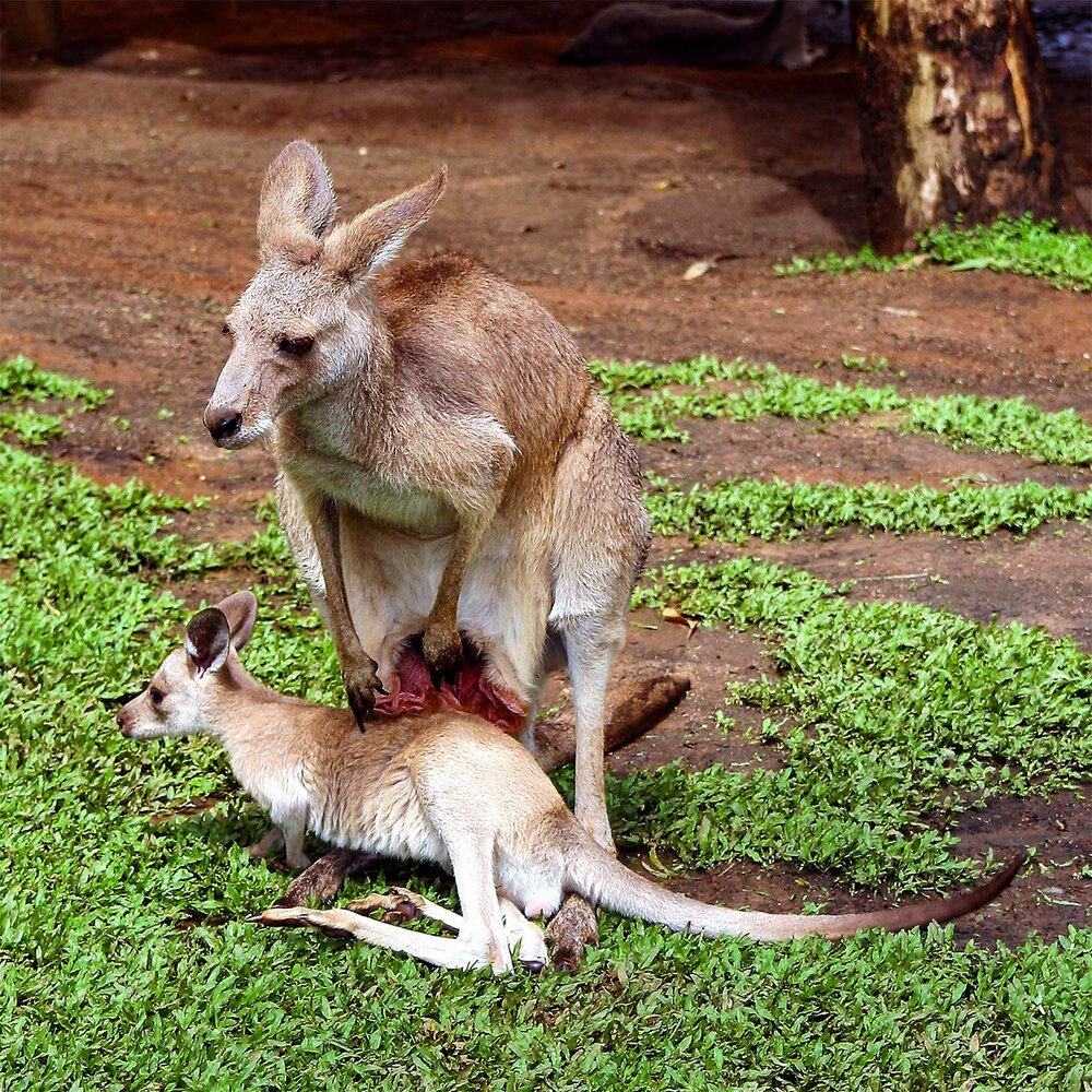 Mum & Joey