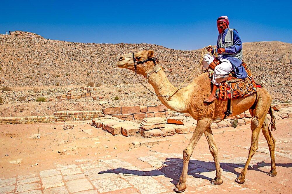 Camel & Bedouin
