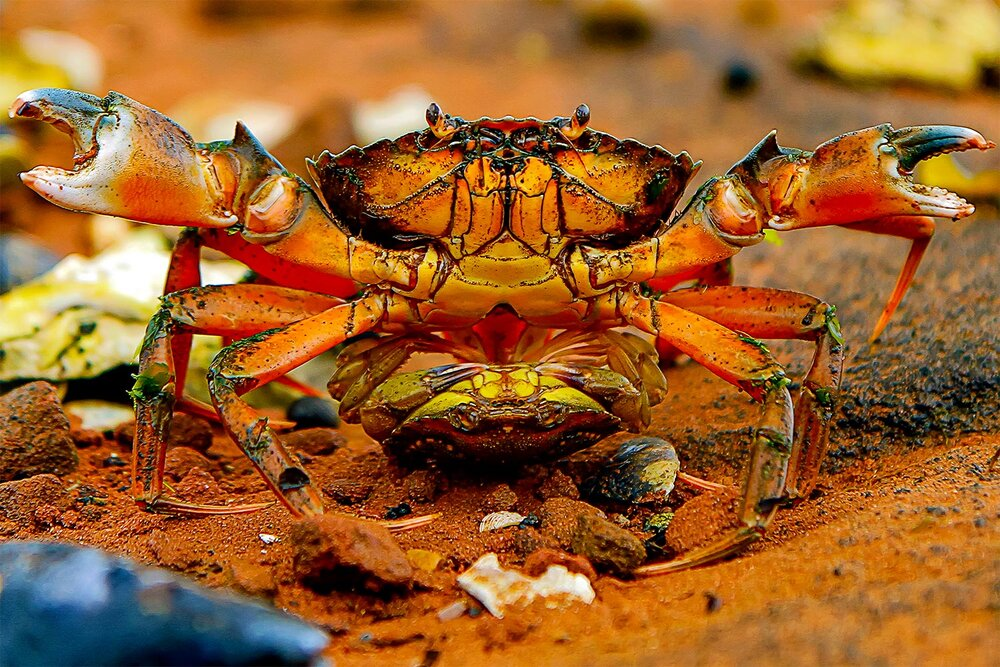 Getting Crabby in PEI