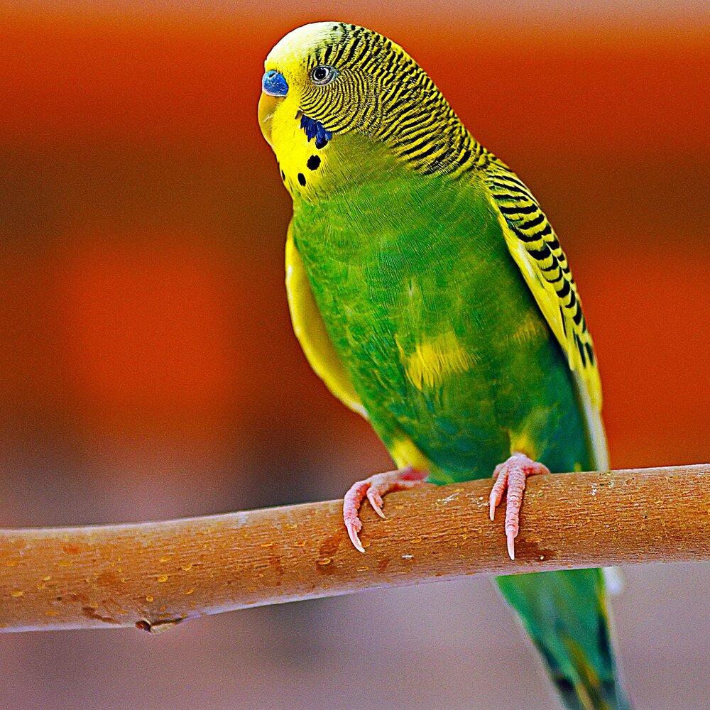 Living Desert Bird