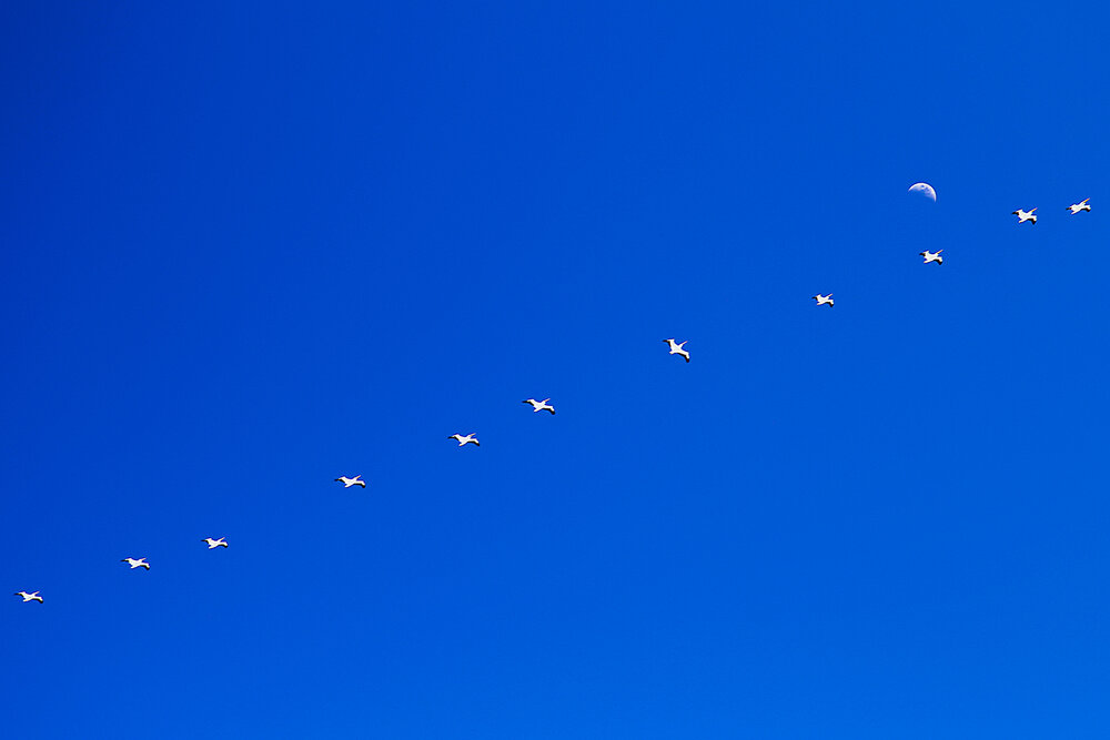 Birds flying high...