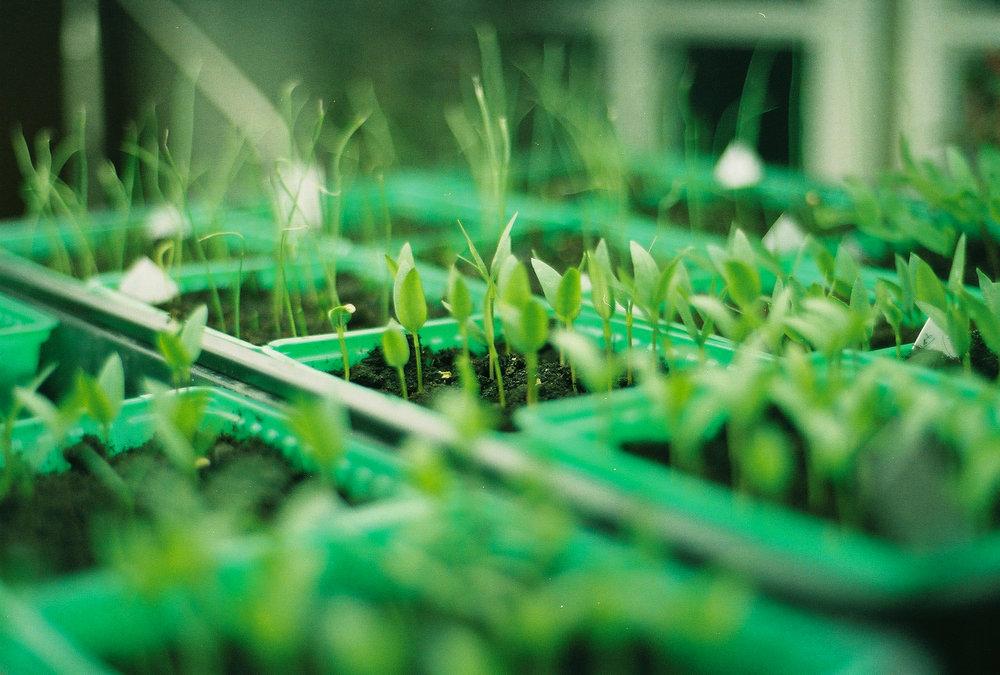 littleplants2.jpg