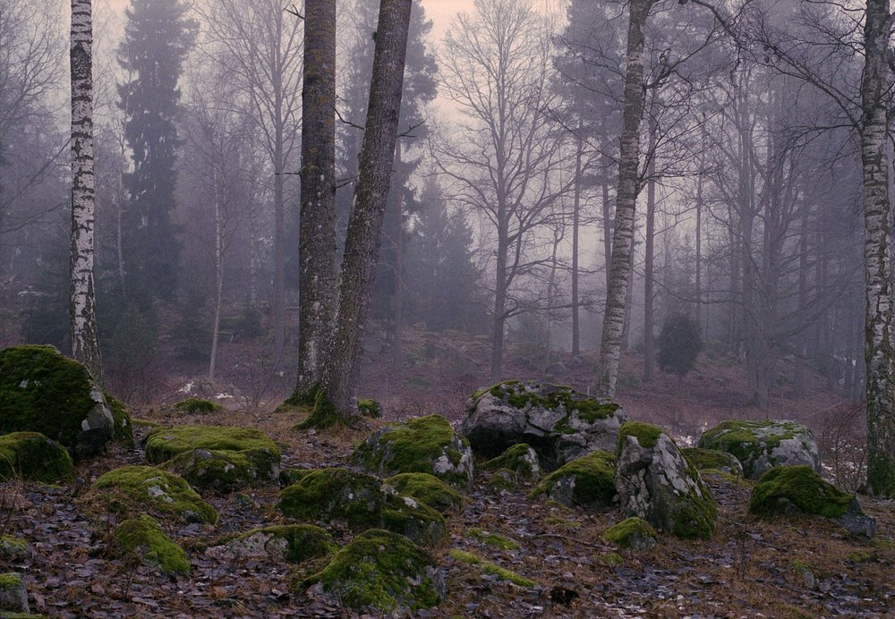 rocks and forest EDIT.jpg