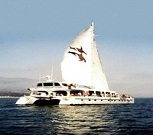 Channel Cat Charters 6 Harbor Way PMB 223, Santa Barbara, CA 93109 805.455.4228 805.898.1015