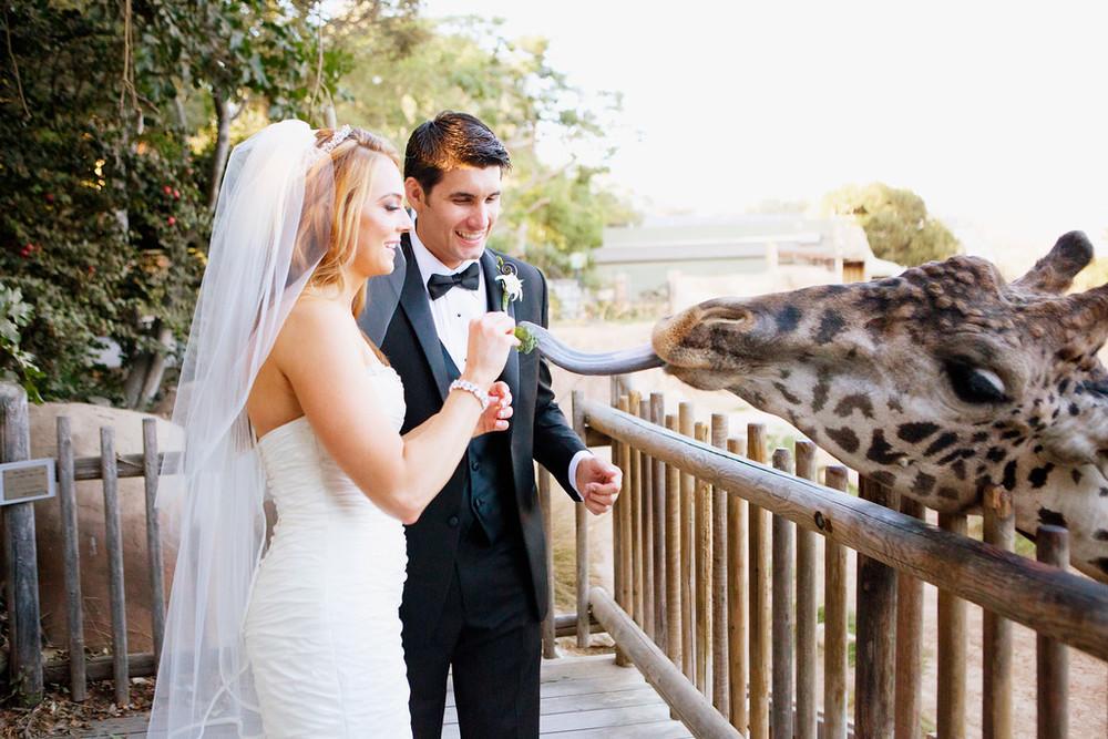 AHSLEY AND TIM'S WEDDING AT THE SANTA BARBARA ZOO -CHLOE MOORE PHOTOGRAPHY