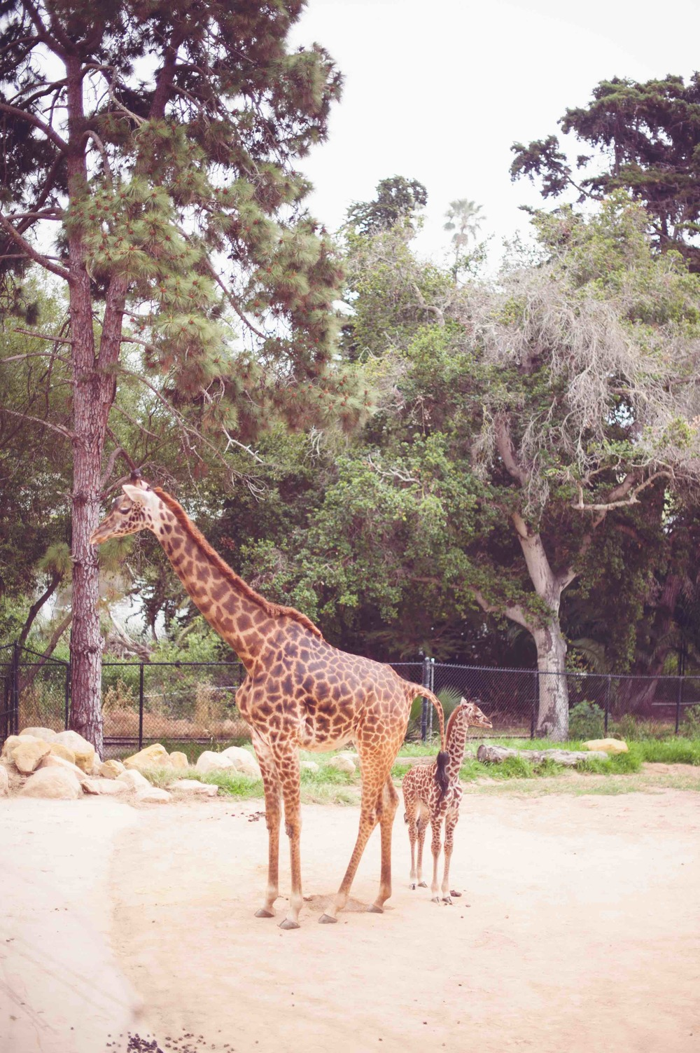 UC_santa_Barbara_Zoo_Wedding1020.jpg