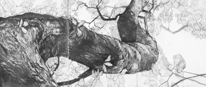 Dryad 11,  2012, Graphite on Arches paper, 95x190cm (triptych)