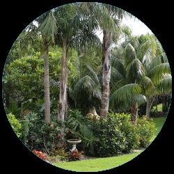 korora garden 2.png