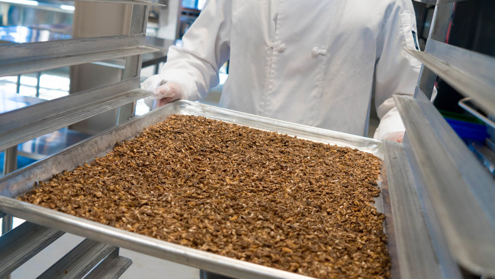 tiny-farms-whole-roasted-frozen-crickets-111_orig.jpg