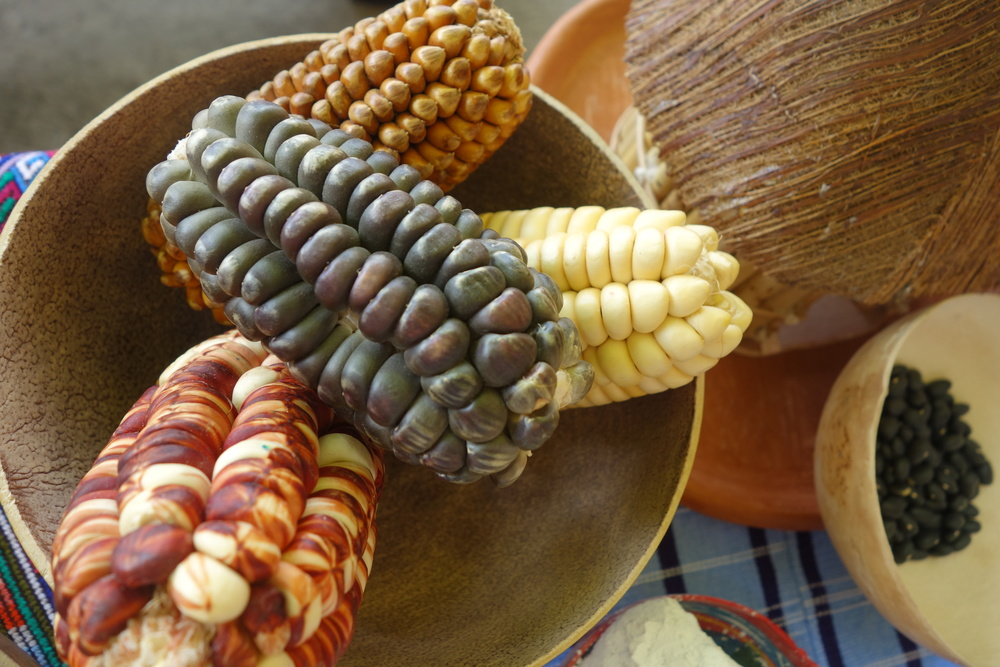 Mayan Corn Close Up.jpg
