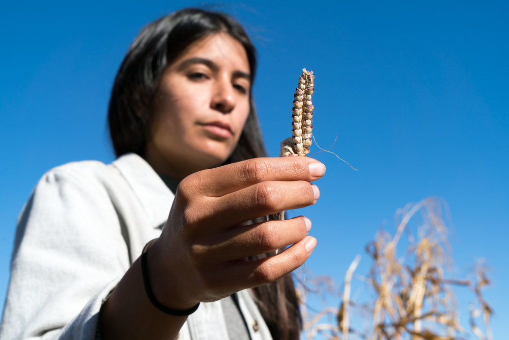 Teosinte, the ancestor of corn, is held by Maya Harjo, who has been growing the 3 Sisters  with teosinte nearby, offering wild accompaniment to the domesticated corn, beans and squash.