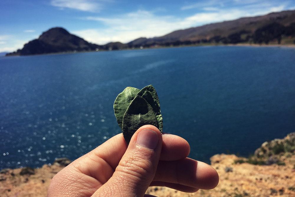 Coca leaves are offered to Lake Titicaca and the sacred Sleeping Dragon mountain in Santiago de Okola, Bolivia, where the community has been restoring native medicinal and food plants