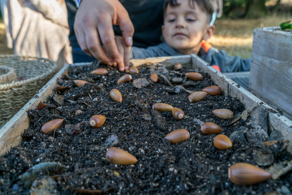 A father and son plant Valley Oak acorns, a staple foods of Native Californians, at our Indian Valley Organic Farm and Garden