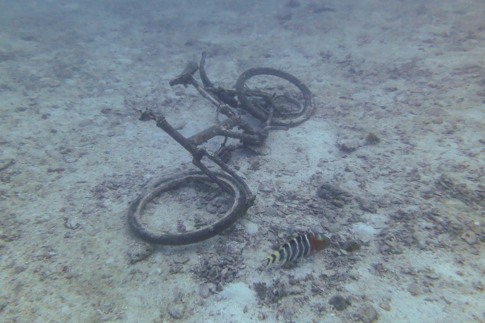 A sunken bicycle looking forlorn on the seabed.