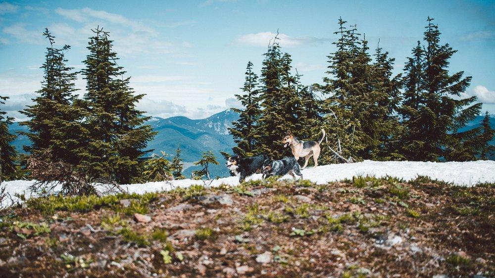 Snowshoe Butte (26 of 53).jpg