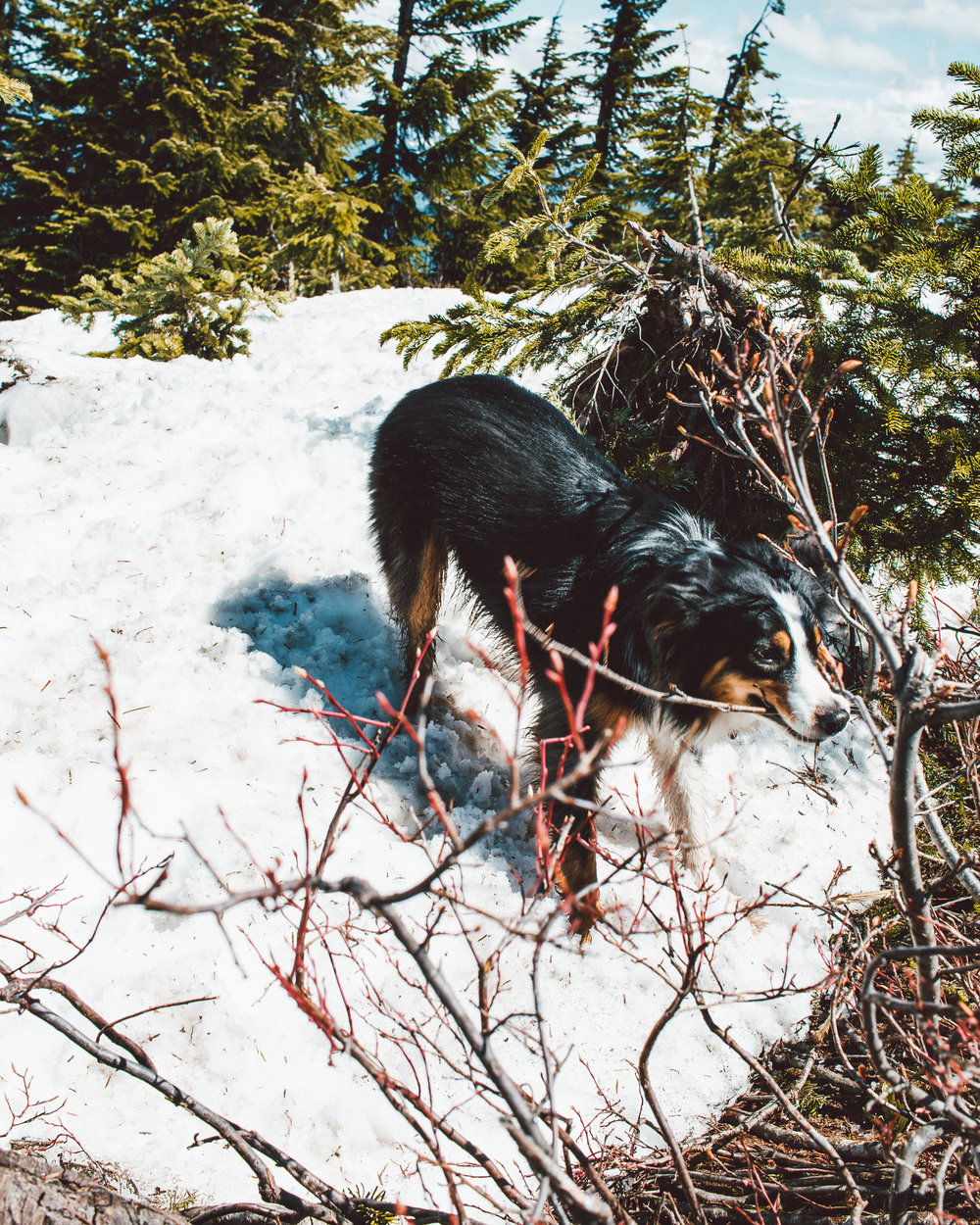 Snowshoe Butte (30 of 53).jpg