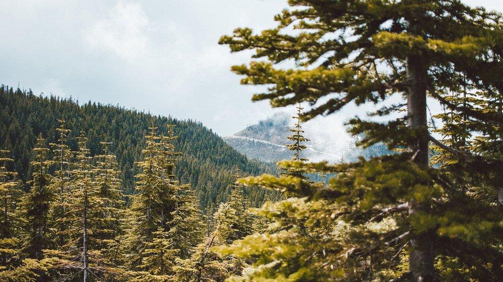 Snowshoe Butte (42 of 53).jpg
